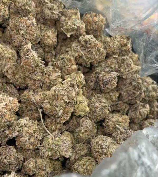 Lungsmacker Surffs Up weed strain